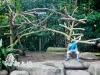 2013假期-新之旅(day3/动物园&夜间动物园)